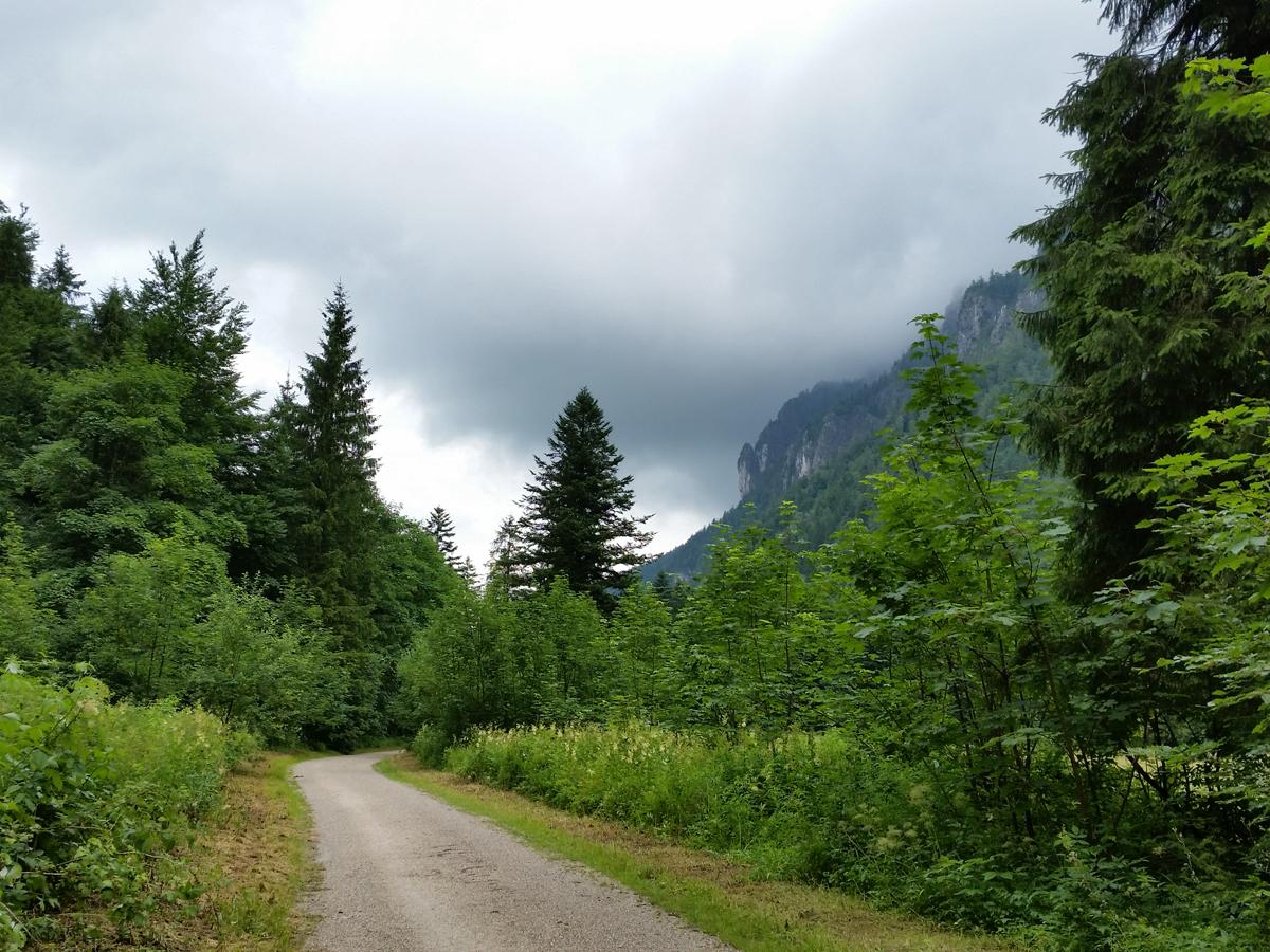Auf dem Weg zwischen Falkenstein und Gruberhörndl