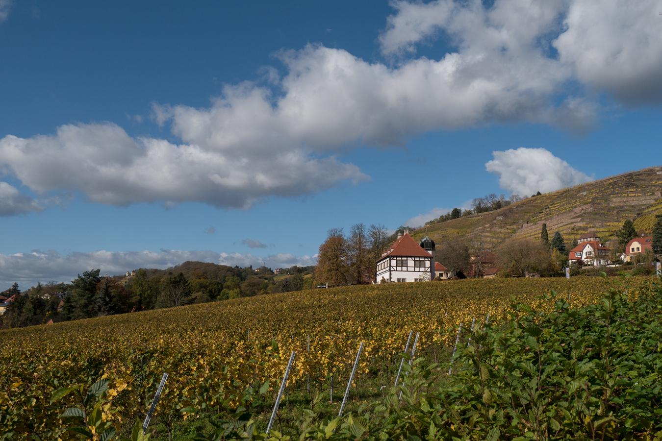 Blick zur Hoflößnitz