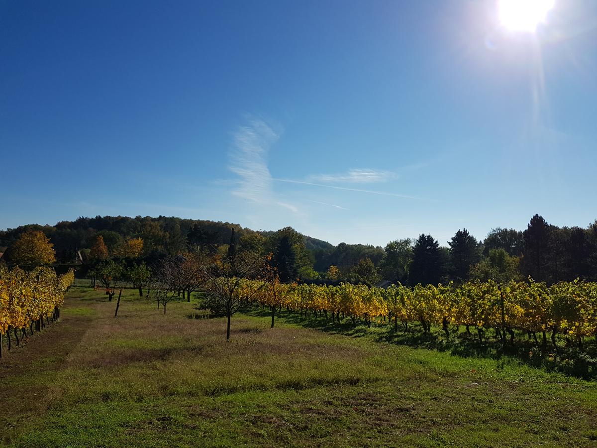 Weinanbauanlage