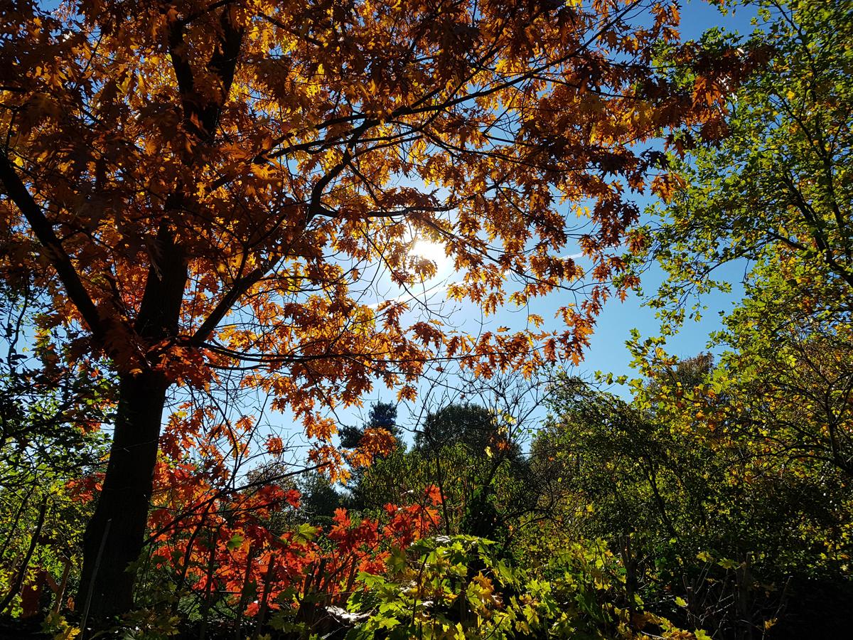 Herbst auf der Karlshöhe