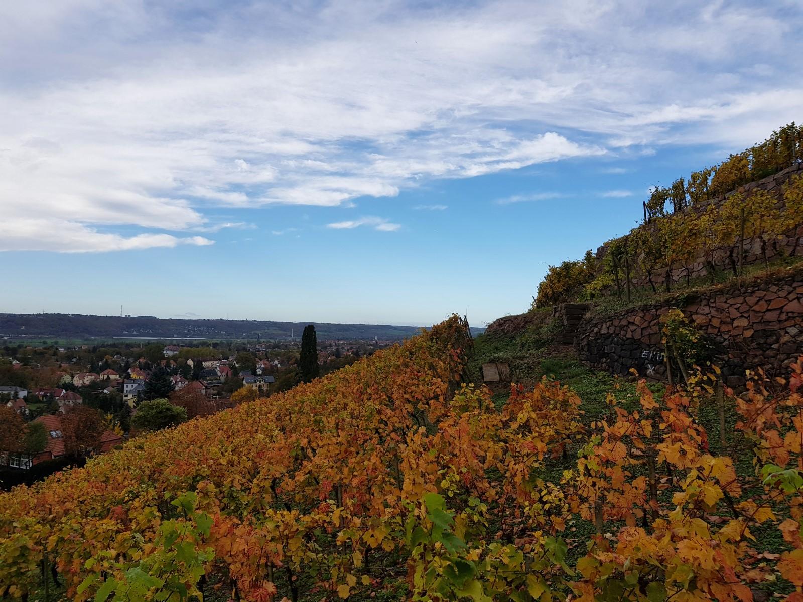 Weinanbau neben der Spitzhaustreppe