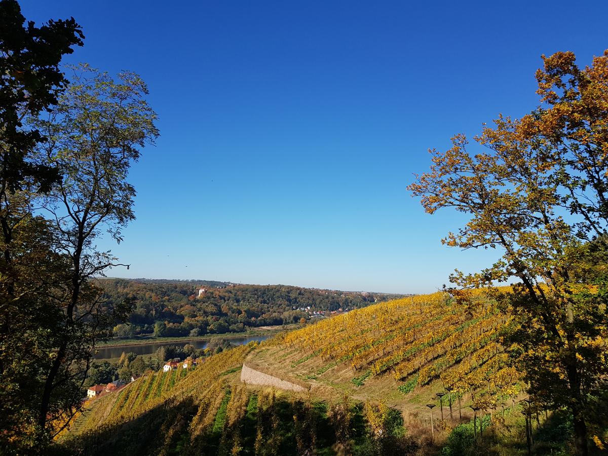 Blick über die Weinanbauflächen am Klausenberg über die Elbe zum Schloss Siebeneichen