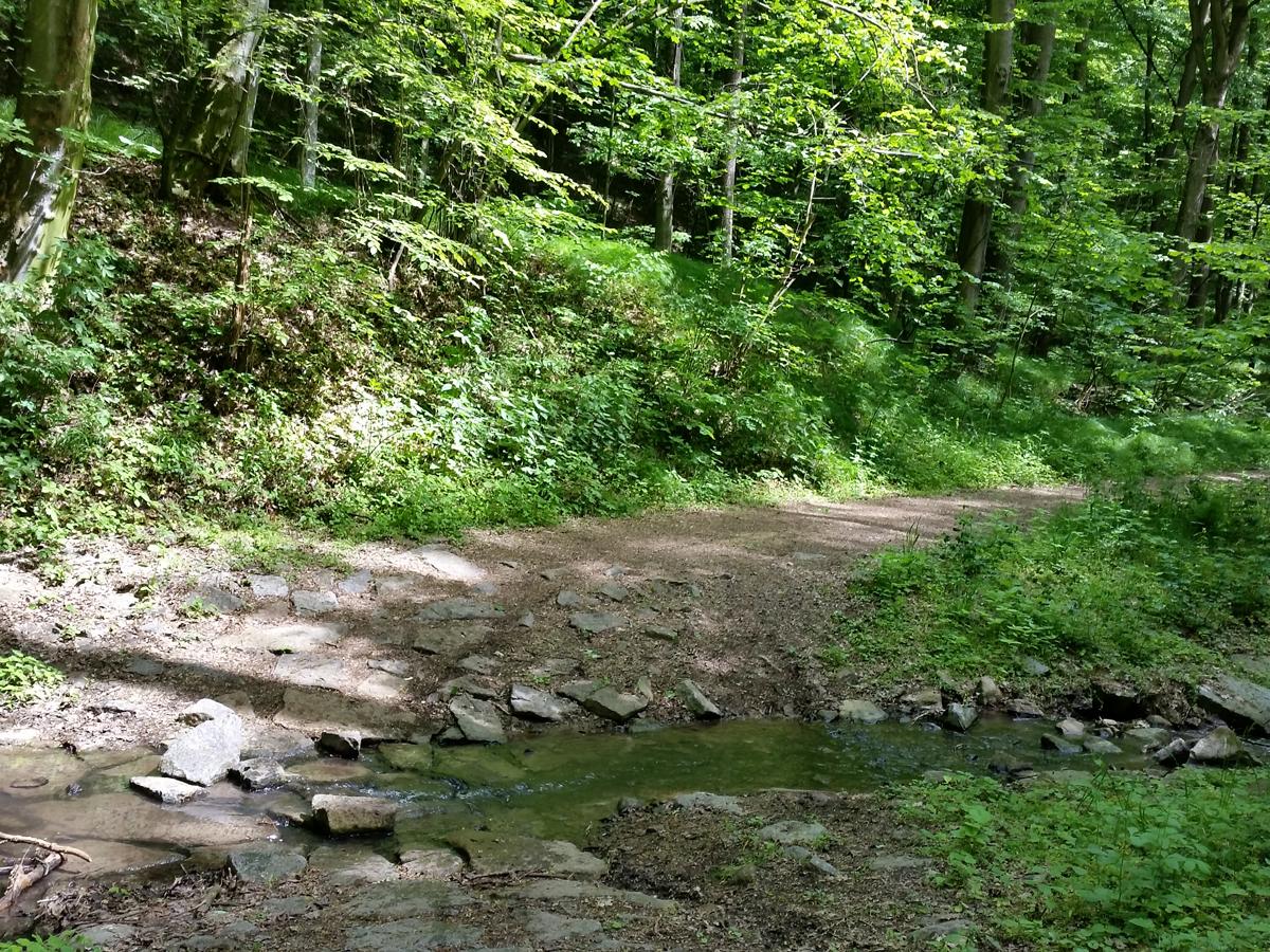 Weg durch den Gauernitzbach