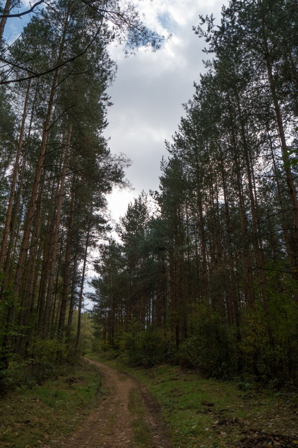 Weg durch den Friedewald