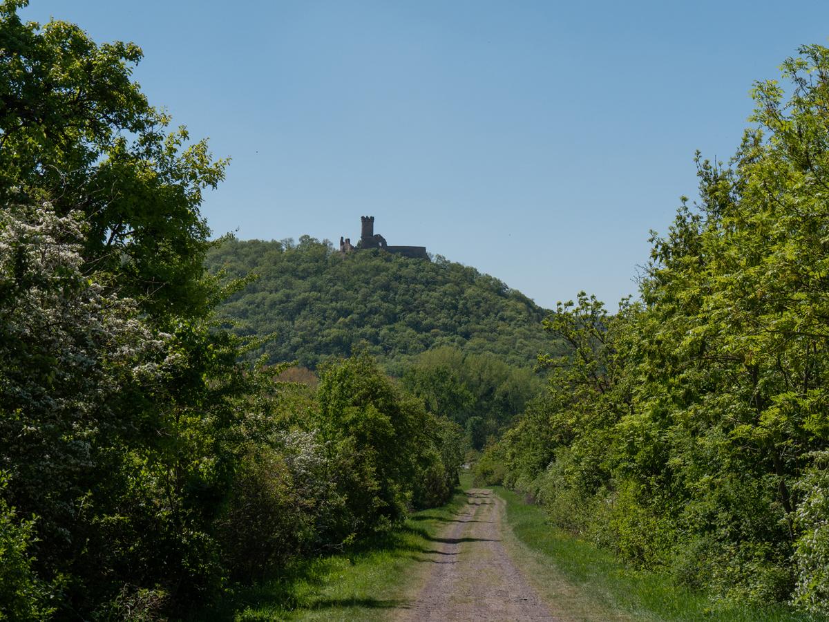 Blick zur Mühlburg vom Fuße der Burg Gleichen
