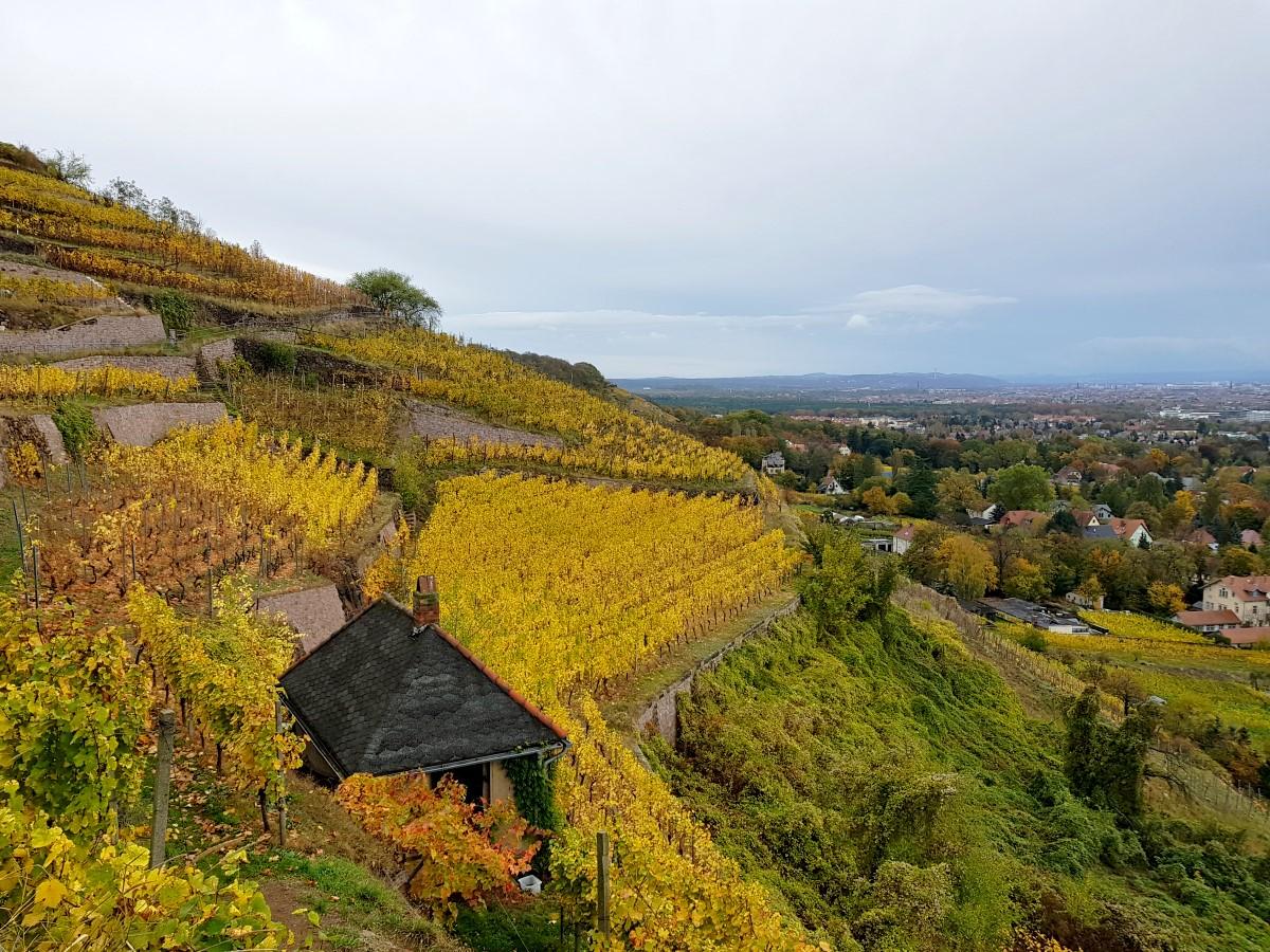 Weinanbau am Spitzhaushang