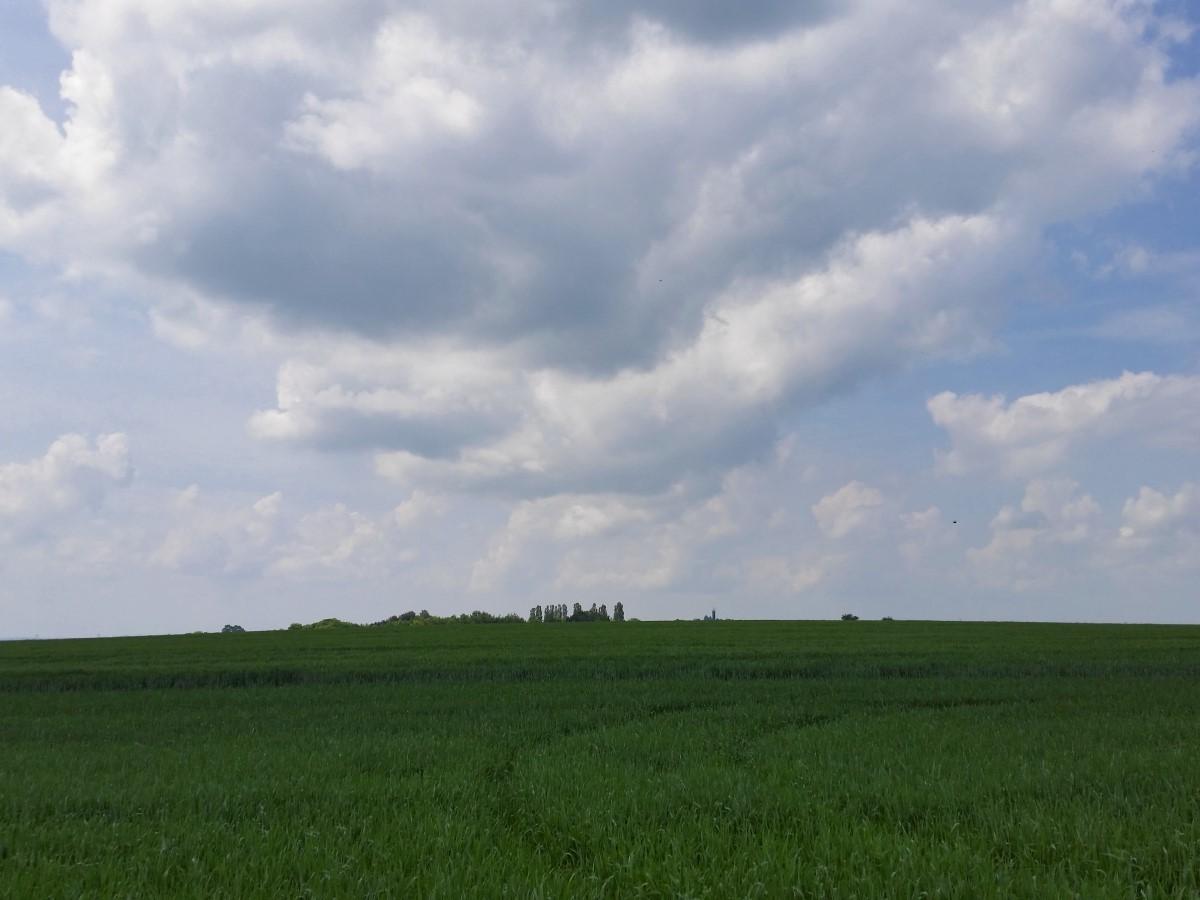 Blick vom Reichenbacher Weg zu dem Sendemast bei den Polenzer Linden