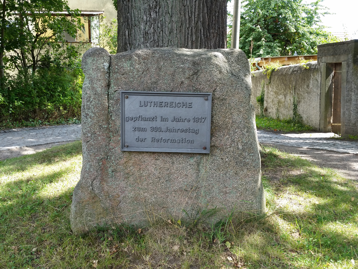 Info zur Luthereiche in Blankenstein