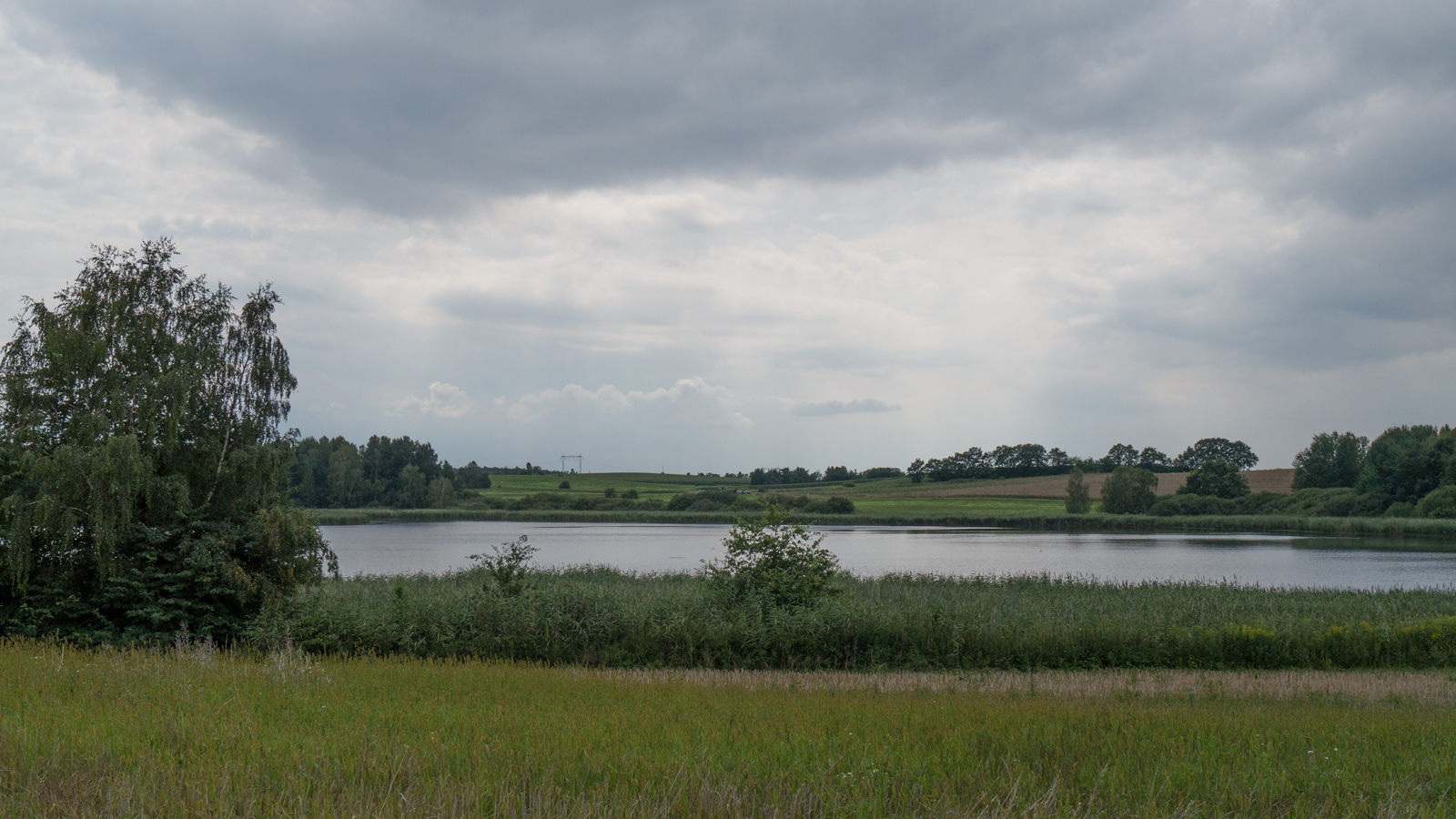 Am Nordufer des Dippelsdorfer Teiches
