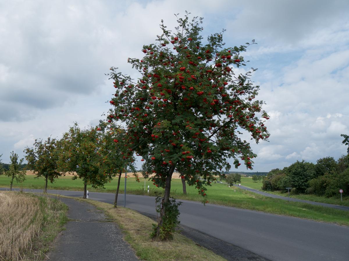 Hinter Reichenberg geht es ein Stück auf dem Radweg entlang.