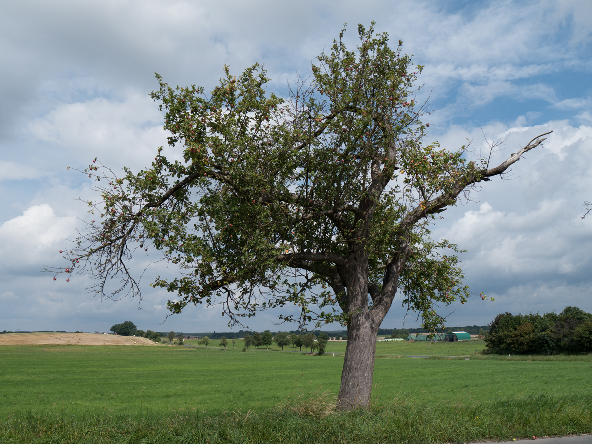 Im Lößnitzhochland