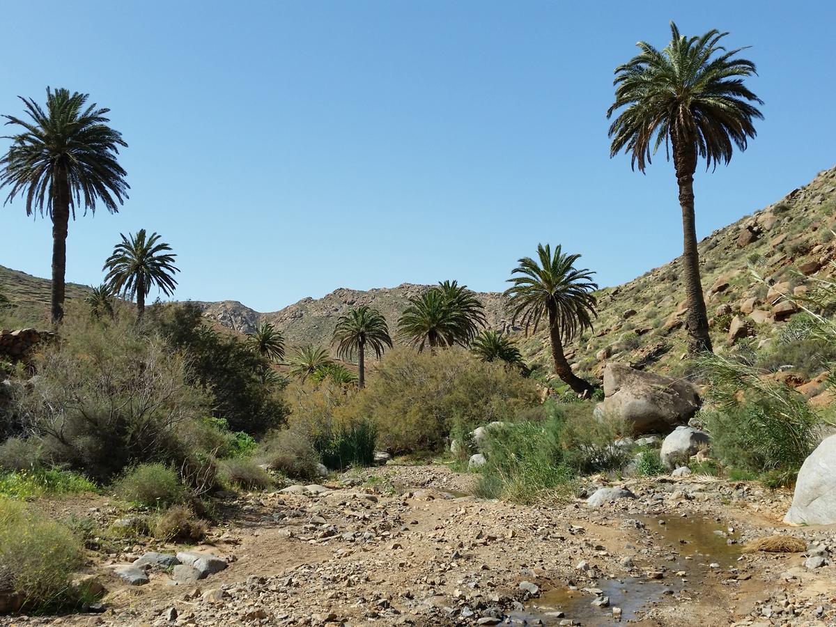 Der Weg führt weiter durch ein schönes Palmental.