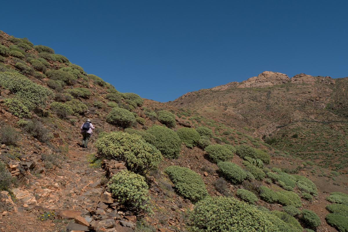 Balsam-Wolfsmilch neben dem Aufstiegsweg zur Passhöhe