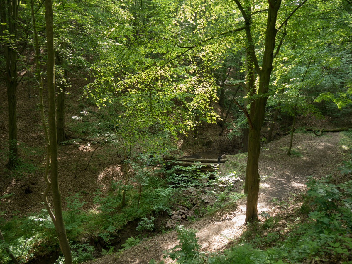 Aufwärts geht's über den Polenzer Weg entlang dieses Bachverlaufs.