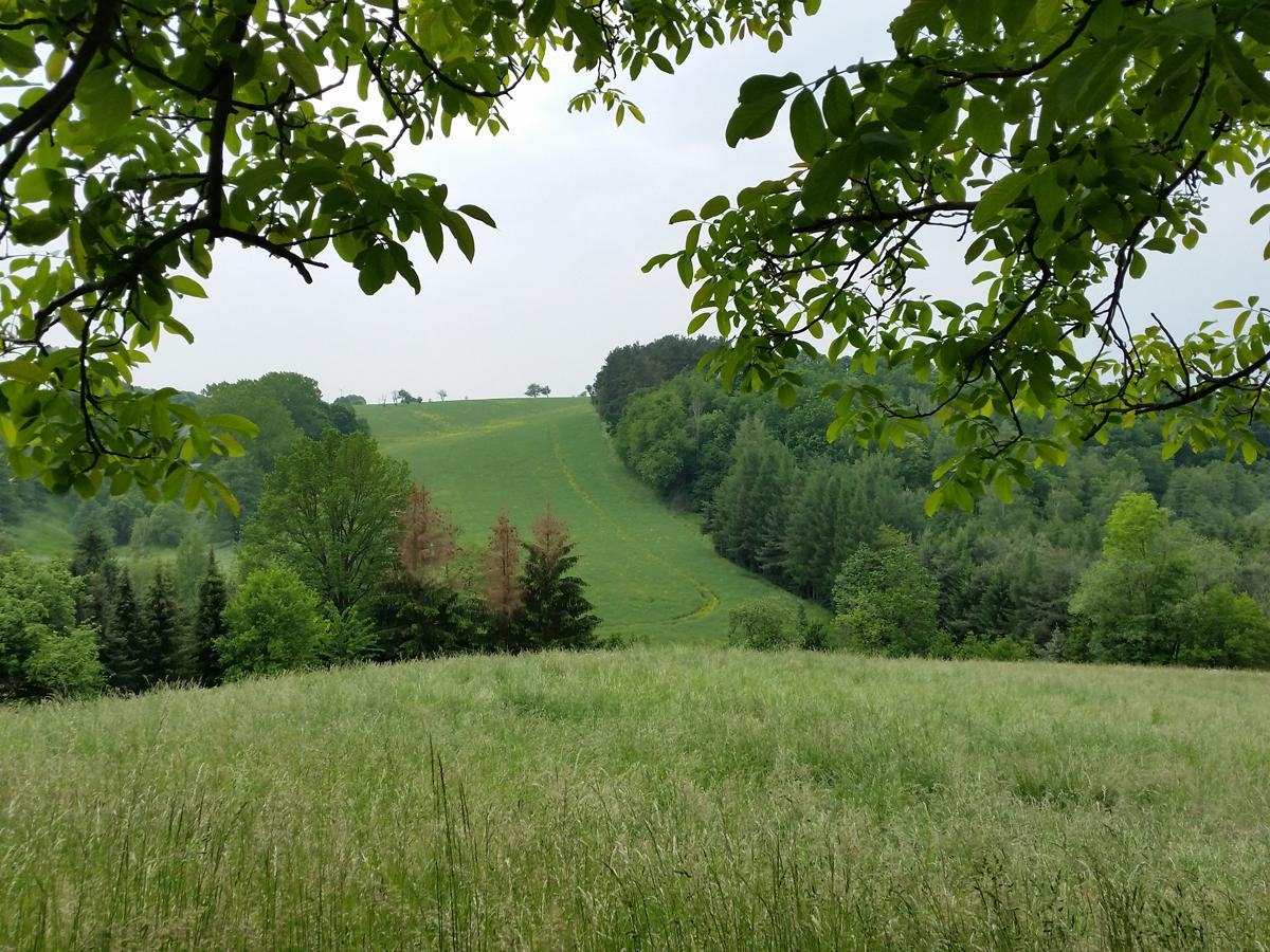 Auf dem Wanderweg oberhalb von Semmelsberg