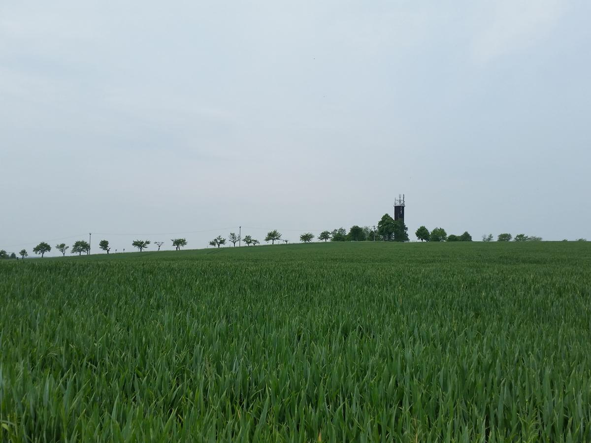 Blick zum Sendeturm und den Polenzer Linden vom Buschbadweg