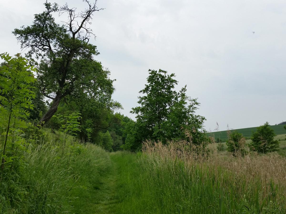 Auf dem Eselsweg in Polenz