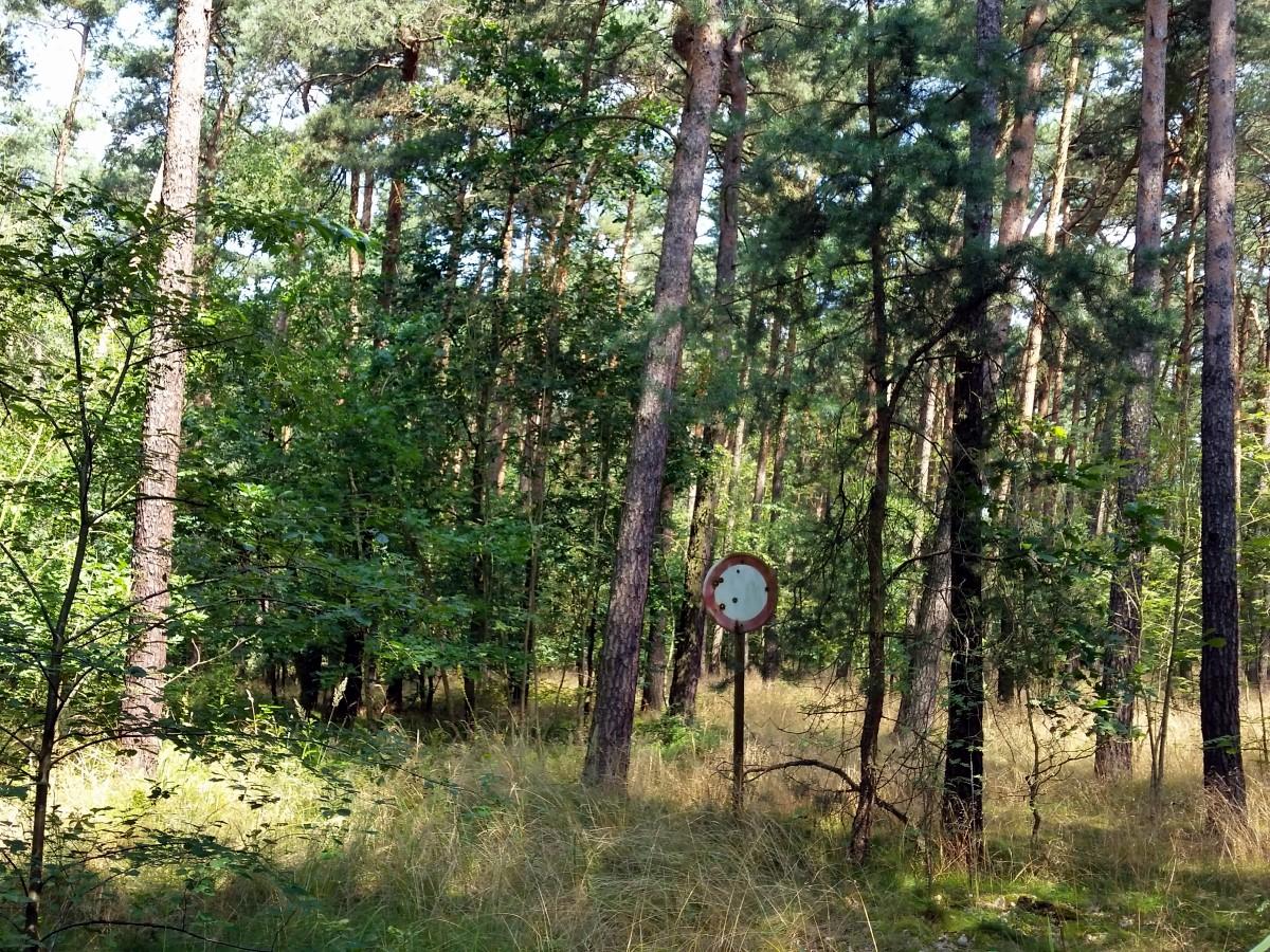 Am Knochenberg in Ebersbach/Ortsteil Rödern
