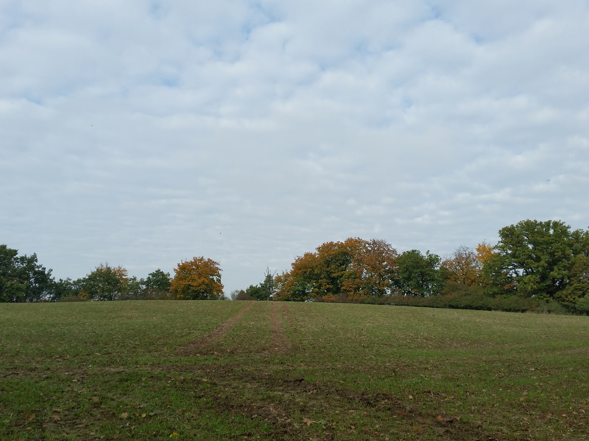 Bodendenkmal Hohe Eifer