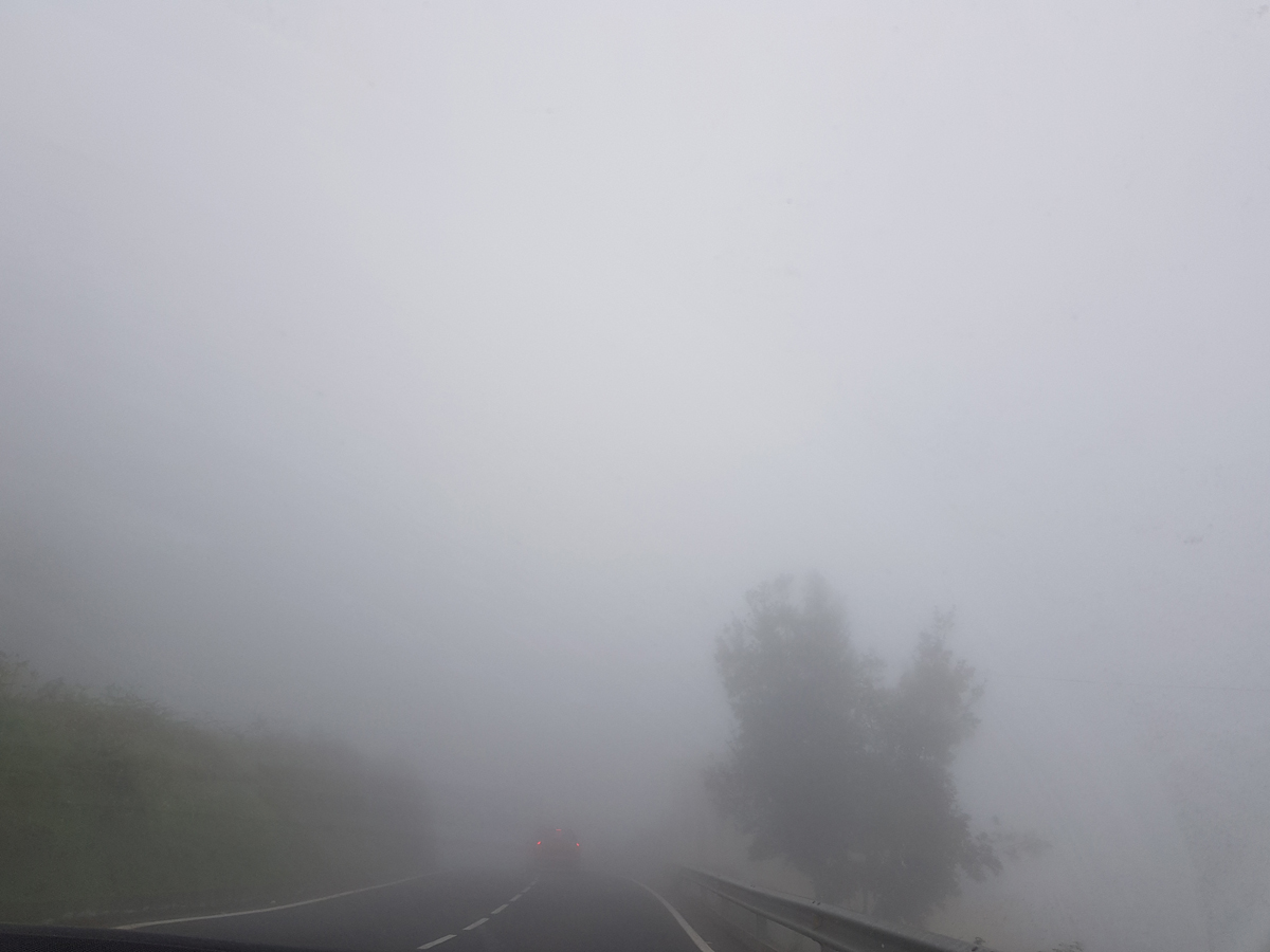 Dichter Nebel auf unserer Rückfahrt unterhalb von Aguamansa in einer Höhe von 800 m