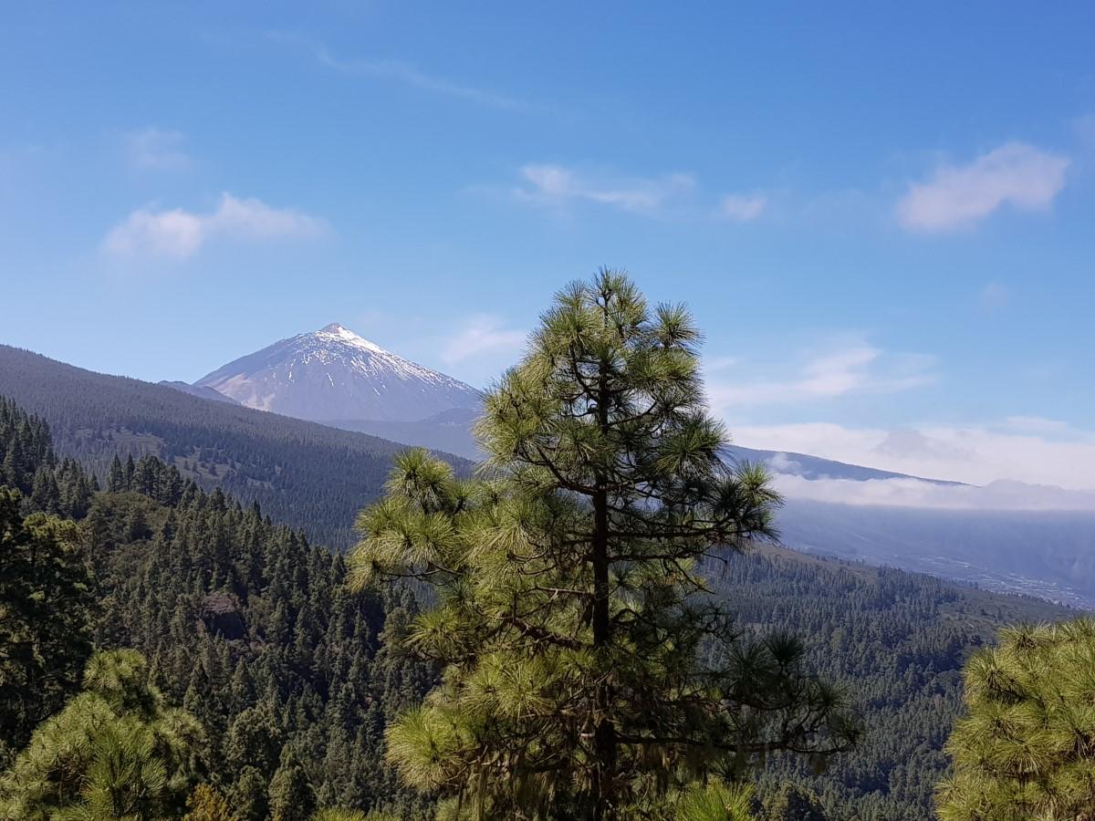 Blick zum Teide von der Ruta del Agua im Oberen Orotava-Tal