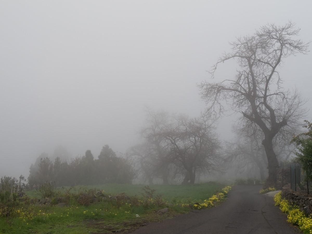 Aguamansa im Nebel