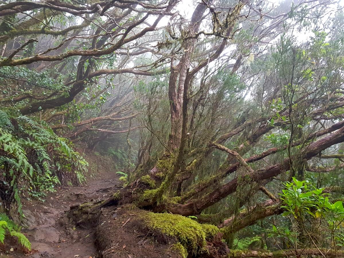 Unterwegs auf der Chinobre-Runde im Anaga-Gebirge
