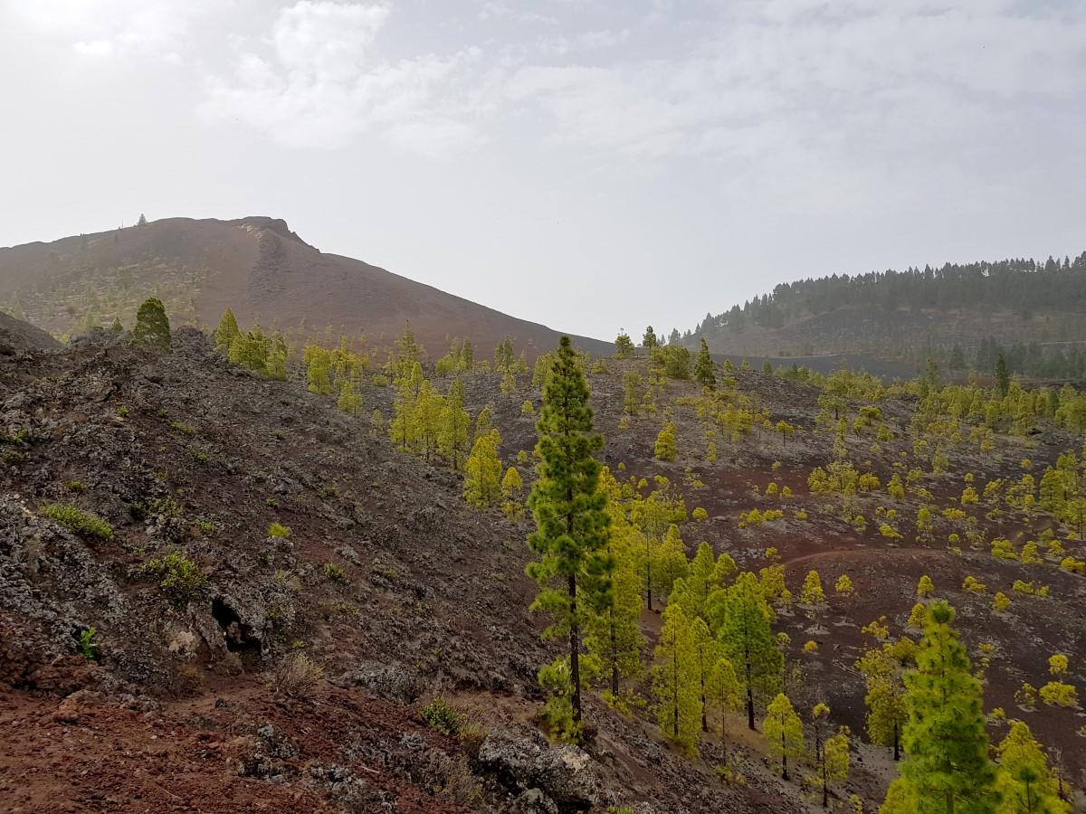 Wanderung um den Volcan Garachico