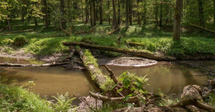 Im Naturschutzgebiet Tiefental