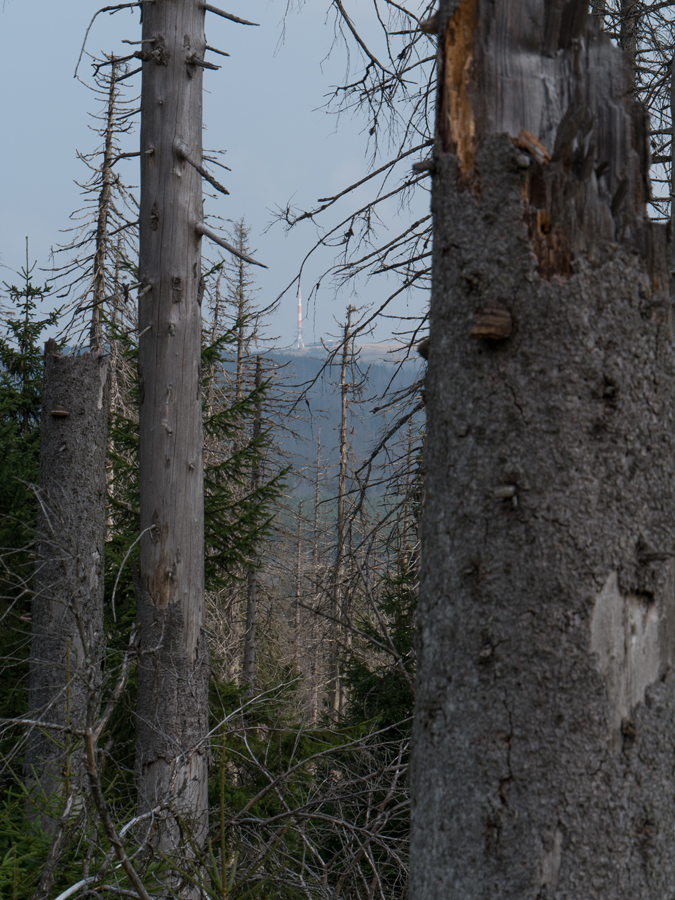 Ein Durchblick zum Brocken vom Abstiegsweg