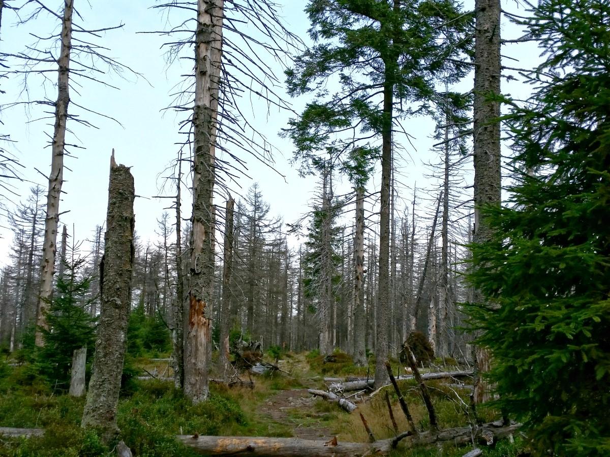 Waldansicht vor der Achtermannshöhe