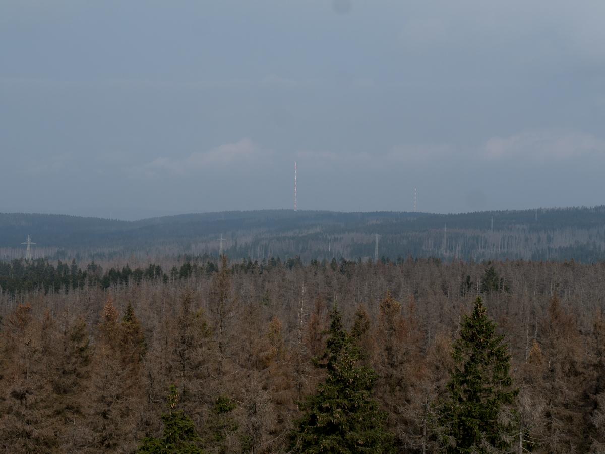 Blick Richtung Torfhaus