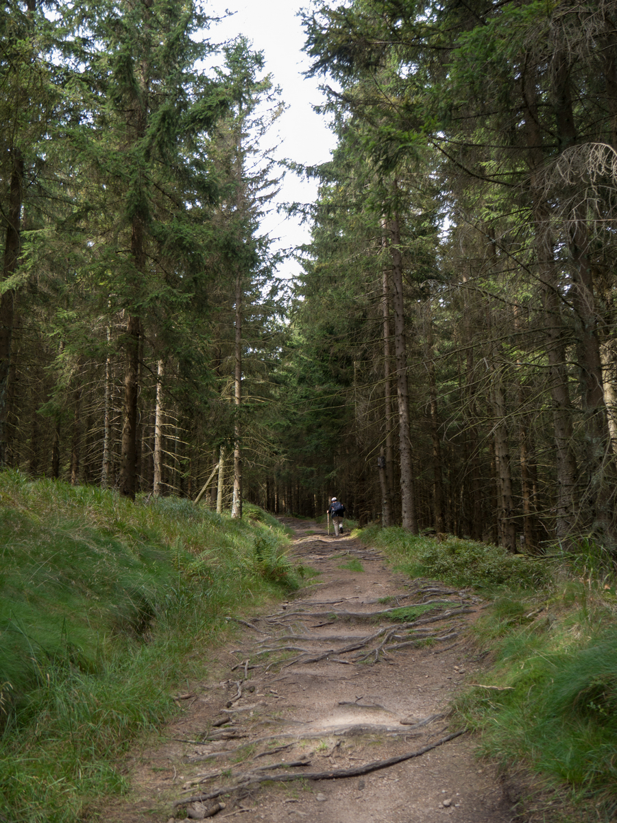 Auf dem Wurmbergstieg