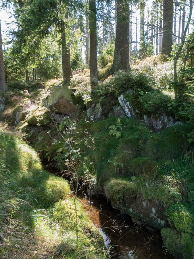 Wanderweg entlang des Abbegrabens