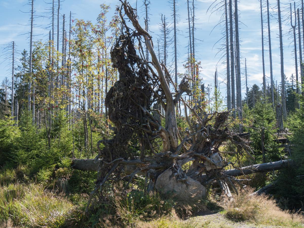 Naturbelassener Wald...